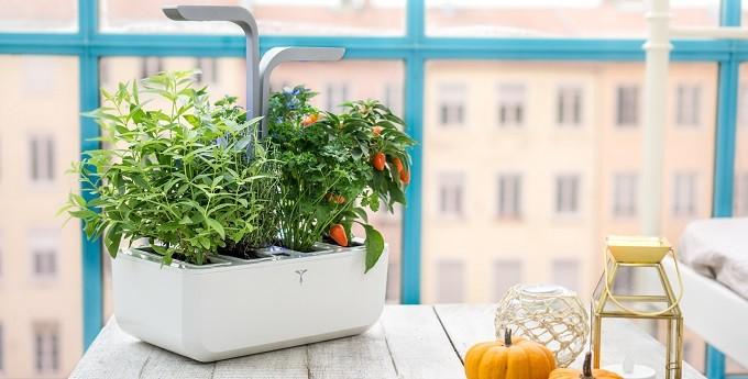 Potager Véritable : jardinez dans votre salon