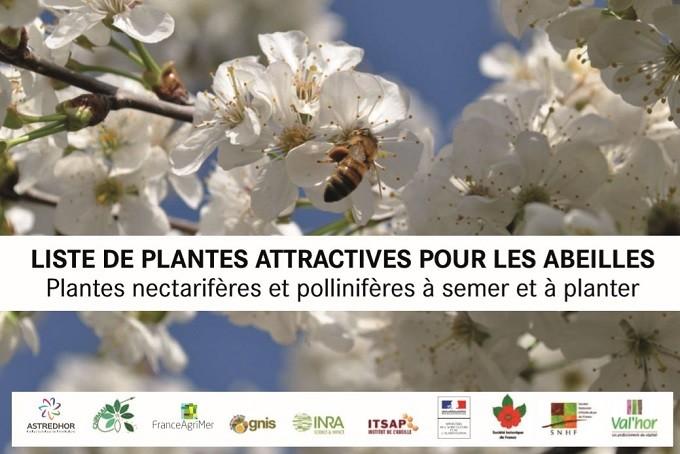 Et si on plantait des fleurs pour aider les abeilles ?